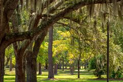 Garden of Spanish Moss Trees royalty free stock photography