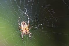 Garden Spider Royalty Free Stock Photos