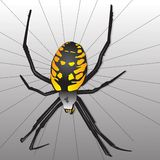 Garden Spider. Illustration, black and yellow stock illustration