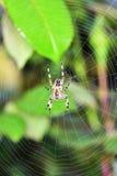 Garden Spider in the autumn garden Stock Photo