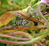 Garden Spider Stock Images