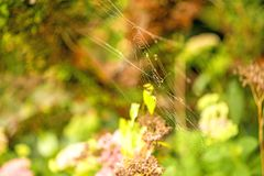 Garden spider web Royalty Free Stock Images