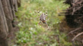 Garden spider on Web - close-up Stock Photo
