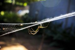 Garden Spider on Web in Close-up Photography stock photo