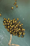 Garden Spiderlings Stock Photo