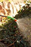Garden work. A garden sprayer in action, the fight against plant stock image