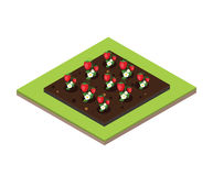 Garden in spring. Isometric icon set. Strawberry bed. Vector illustration. Flat 3d  isometric illustration. Concept picture Stock Photography
