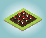 Garden in spring. Isometric icon set. Strawberry bed. Vector illustration. Flat 3d vector isometric illustration. Concept picture Stock Photos
