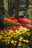 Garden in spring with lots of tulips. Spring garden with lots of colorful, beautiful tulips - vertical image Royalty Free Stock Photography