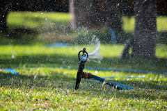 Garden Sprinkler Stock Photography