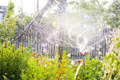 Garden sprinkler. A home garden being watered with a sprinkler, water drops in midair royalty free stock image