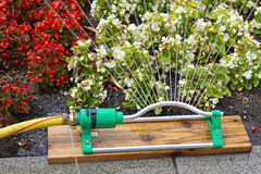 Garden sprinkler. Spraying water at plants and flowers Royalty Free Stock Photo