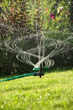 Garden sprinkler. Summer, sun rise stock photos