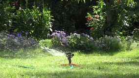 Garden sprinkler on sunny day watering green lawn in garden. 4K stock video footage