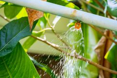 Garden sprinkler water irrigation system stock photo