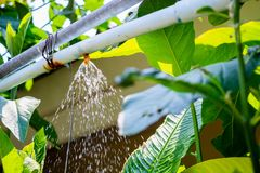 Garden sprinkler water irrigation system. In garden stock photo