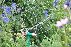 Garden sprinkler watering grass at sunny day and droplets of water royalty free stock image