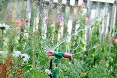 Garden sprinkler watering grass at sunny day and droplets of water stock image