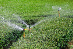 Garden Sprinkler Watering Tea Plantation. Royalty Free Stock Photography