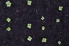 Garden Sprouts stock photos