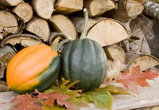 Garden squash in the fall Royalty Free Stock Photography