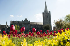 Garden of St. Patrick's Cathedral. The garden of St. Patricks's Cathedral on spring Stock Image