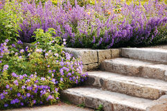 Garden stairs. Stone garden stairs surrounded by purple flowers Royalty Free Stock Photos