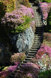 Garden stairway stock photography
