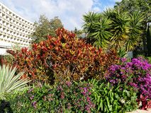 Garden in 5 star hotel in Funchal on the island of Madeira in the Atlantic Ocean. Funchal is the Capital of the island of Madeira. The distinctive houses and Stock Image