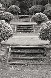 Garden steps Stock Photo