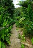 Garden Steps Stock Images