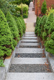 Garden Steps and Path. Stone and gravel garden steps are lined by evergreen plants and lead to brick path Royalty Free Stock Image