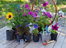 Garden still life with flowers in planting pots and working tools on planks Royalty Free Stock Photography