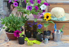 Garden still life with flowers in planting pots, working tools and straw hat Royalty Free Stock Photo