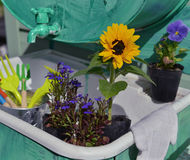 Garden still life with flowers in planting pots and working tools Stock Image