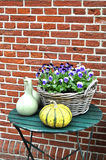 Garden still life with pansies and gourds Royalty Free Stock Photography