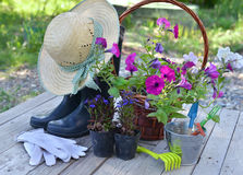 Garden still life with petunia flowers, boots, straw hat and working tools on planks Stock Image