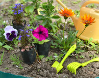 Garden still life with petunias, pansy flowers and tools in flower bed Royalty Free Stock Photos