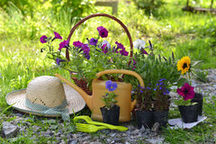 Garden still life with straw hat, petunia flowers and watering can Stock Images