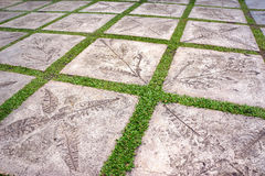 Garden stone path. With grass growing up between the stones Stock Images
