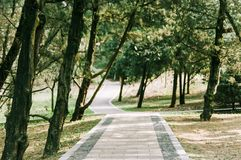 Shady pathway in park stock image