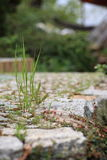 Garden stone path with grass Stock Image