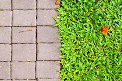 Garden stone path with grass growing Stock Photo