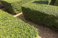 Garden stone path with green plants growing up between the stone Royalty Free Stock Image