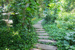 Garden stone path in park Royalty Free Stock Image