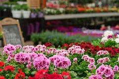 Garden store Stock Photo