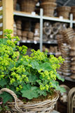 Garden store Royalty Free Stock Photography