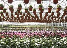 Garden Store Greenhouse Royalty Free Stock Photos