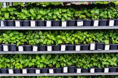 Plants and flower seedlings Royalty Free Stock Images