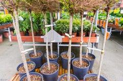 Garden store royalty free stock photos